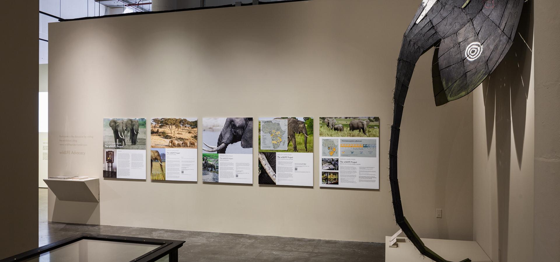 Wildlife Project 1